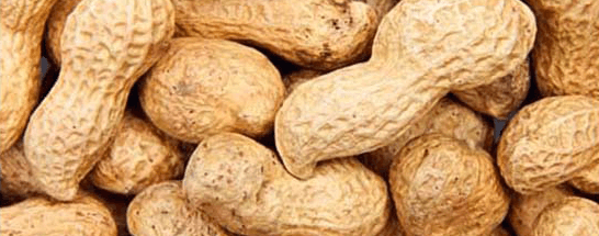 Peanuts are in the 14 Food Allergens you need to be aware of